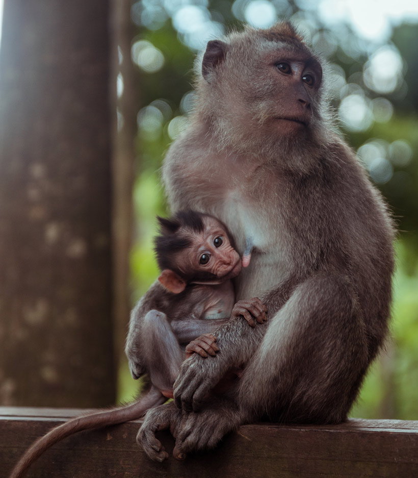 Monkey Forest Ubud | 10 Awesome Things to do in Ubud, Bali | Travel Guide to Ubud