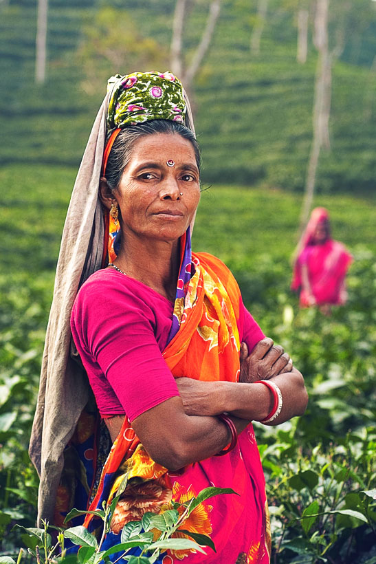 Tea Plantage | Best Places To Visit In India Plus Things To Do | via @Just1WayTicket