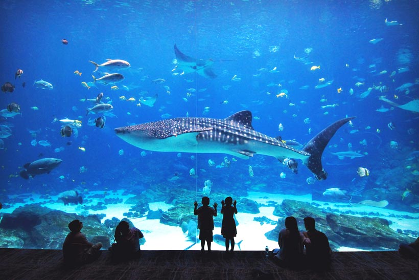 Georgia Aquarium | 8 Fun Things to do in Atlanta | Travel City Guide | via @Just1WayTicket