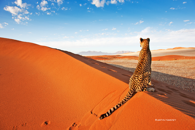 Travel Guide To Namibia - Things To Do And Places To Stay | Photo © Martin Harvey of wildimagesonline.com | Photo taken at Naankuse Wildlife Sanctuary (naankuse.com)