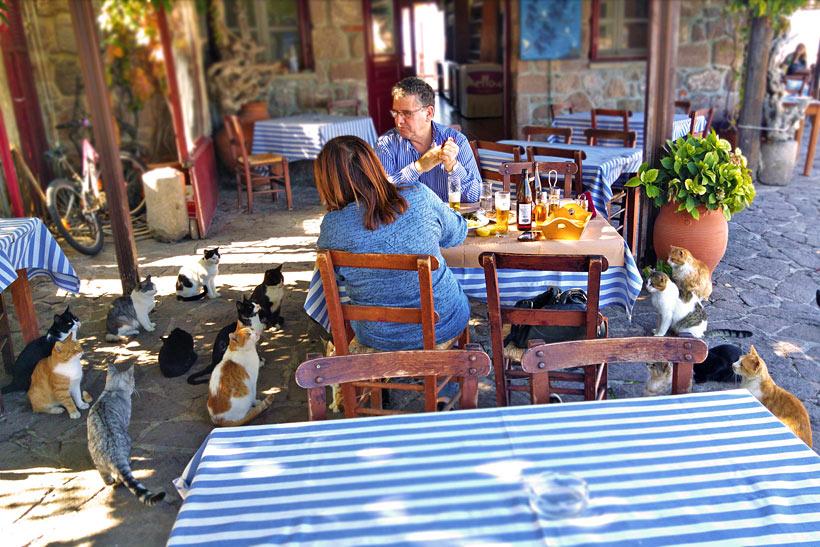 Sykaminea   10 Places You Must Visit In Lesvos Island Greece   via @Just1WayTicket