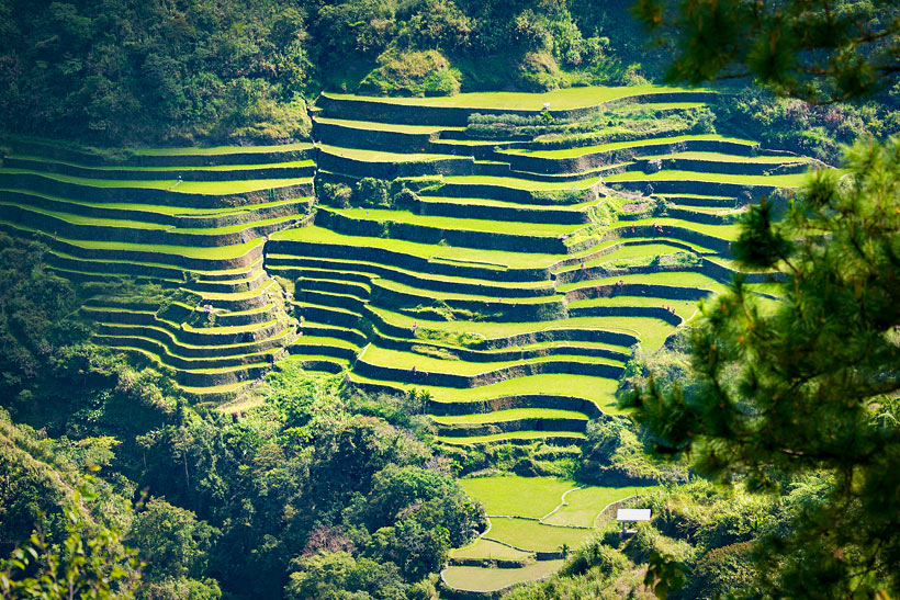 Rice Terraces in Banaue | Top 10 Things to do in the Philippines | via @Just1WayTicket