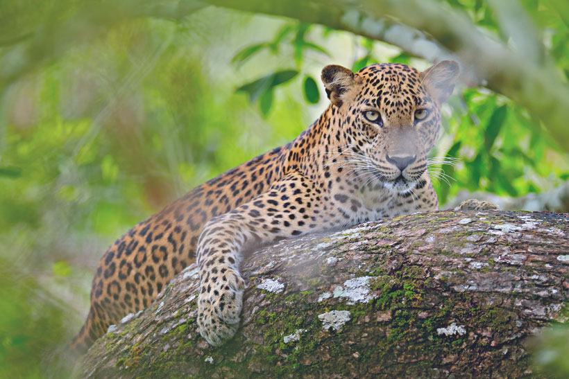 Travel Sri Lanka: 30 Photos That Will Make You Pack Your Bags And Go | Wildlife at Yala National Park