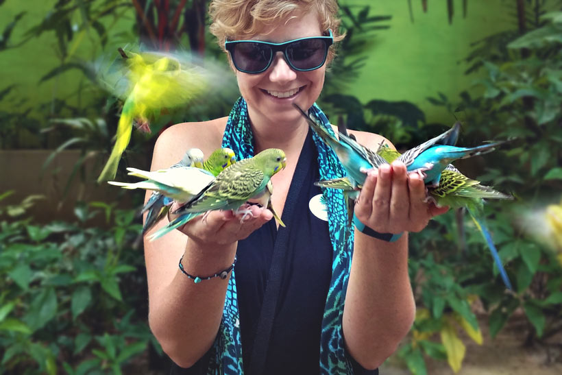 Hand feeding birds at the Wildlife Park in Langkawi Island, Malaysia - 10 Luxury and Adventurous Things to do | via @Just1WayTicket