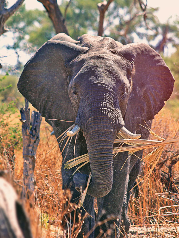 Seeing elephants right in front of me always took my breath away | Volunteering with Wildlife and Children in South Africa - My Enriching Experience | via @Just1WayTicket