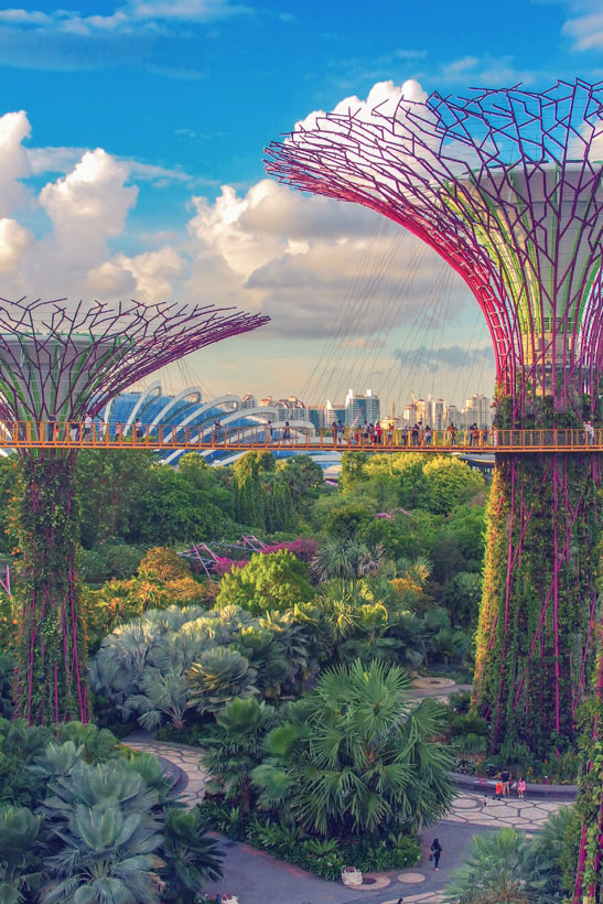 Supertrees at Gardens by the Bay | Best Places to Visit in Singapore in 3 Days | Things to do in Singapore | #singapore #SG #travel #supertrees #gardensbythebay #supertreegrove