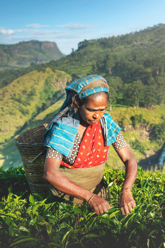 Travel Sri Lanka: 30 Photos That Will Make You Pack Your Bags And Go | Tea Plantation