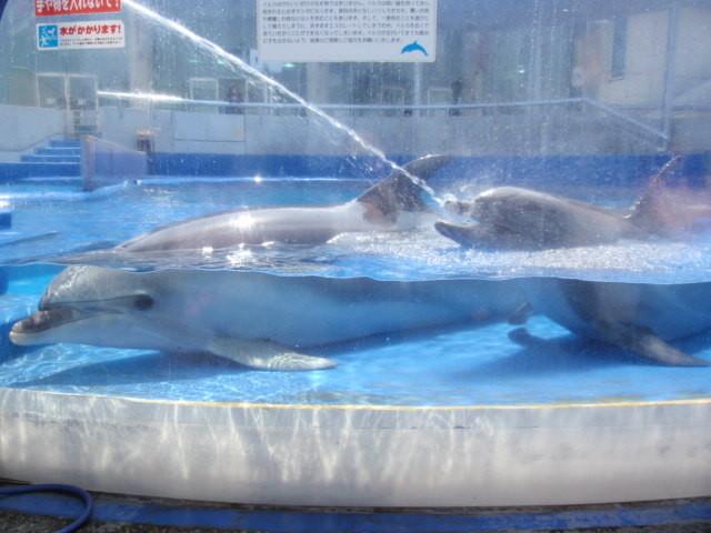 イルカさんたち水浴びしとります。