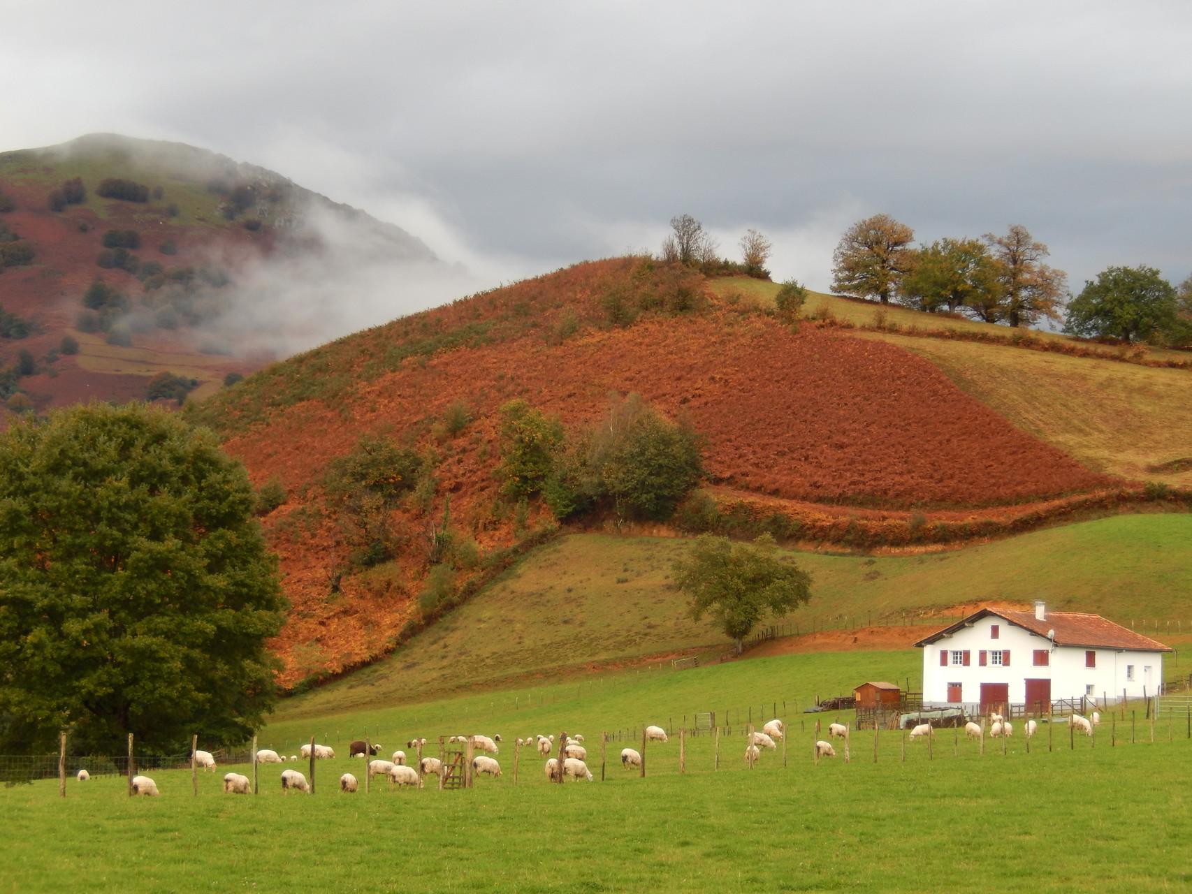Les belles couleurs d'automne