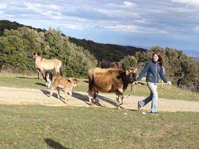 Was frisst die Kuh?