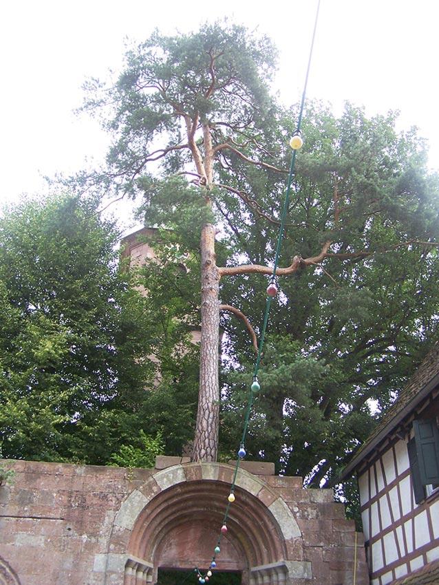 Baum von Bad Herrenalb