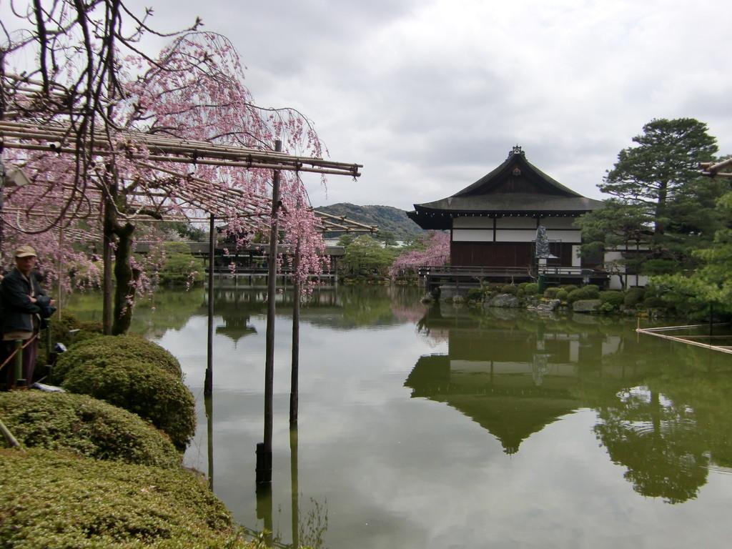 平安神宮神苑 八重紅枝垂桜