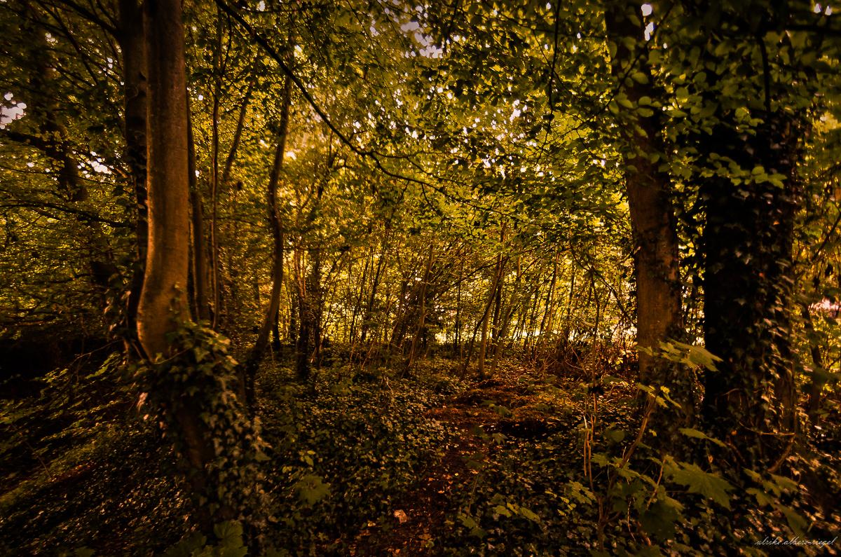 Goldener Sommerwald
