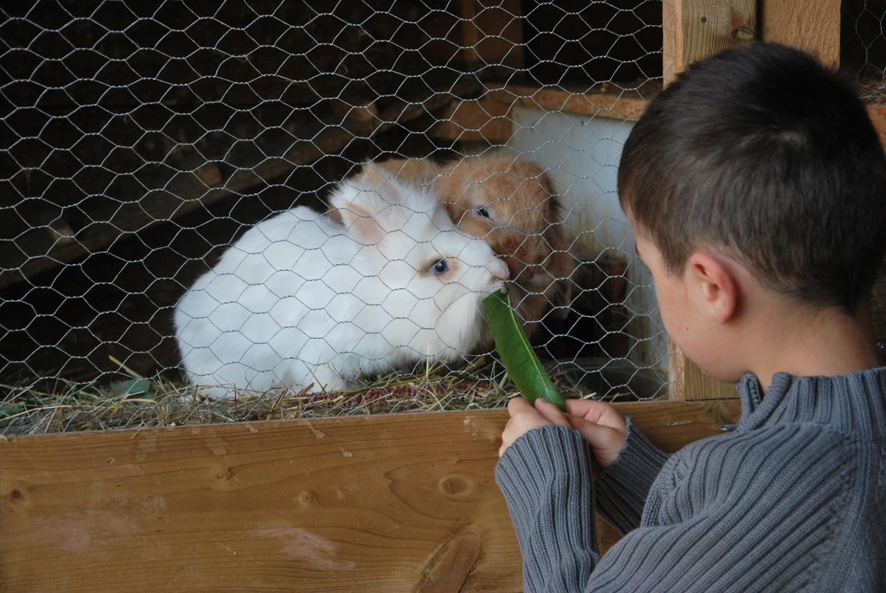Donner à manger aux lapins