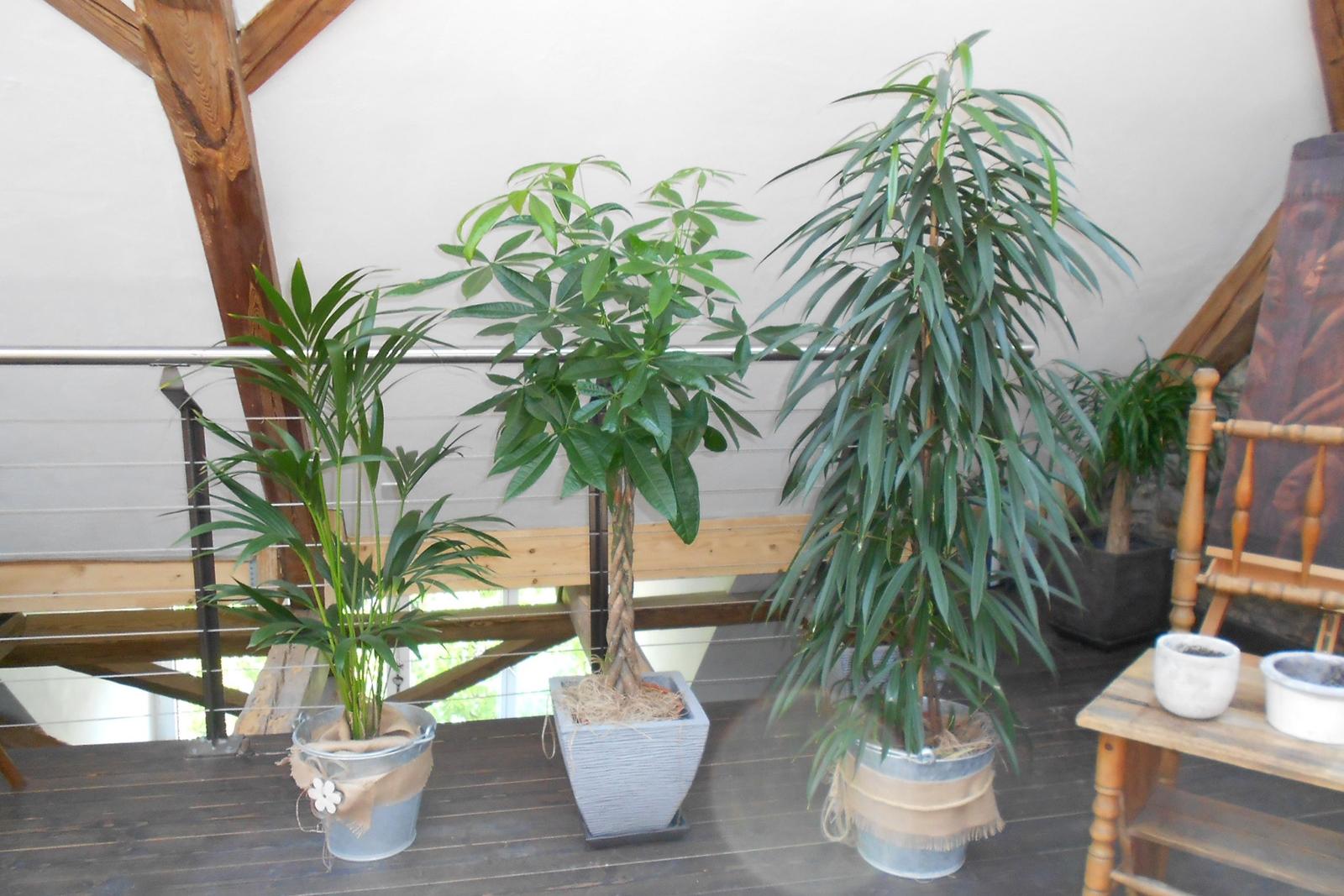 diverse Pflanzen und Bäume