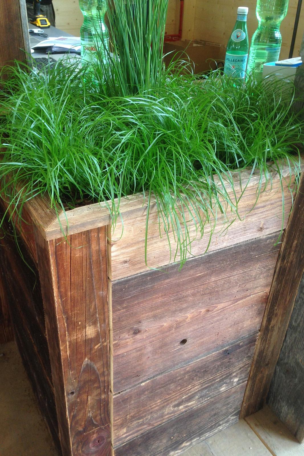 Gras in Holzkisten