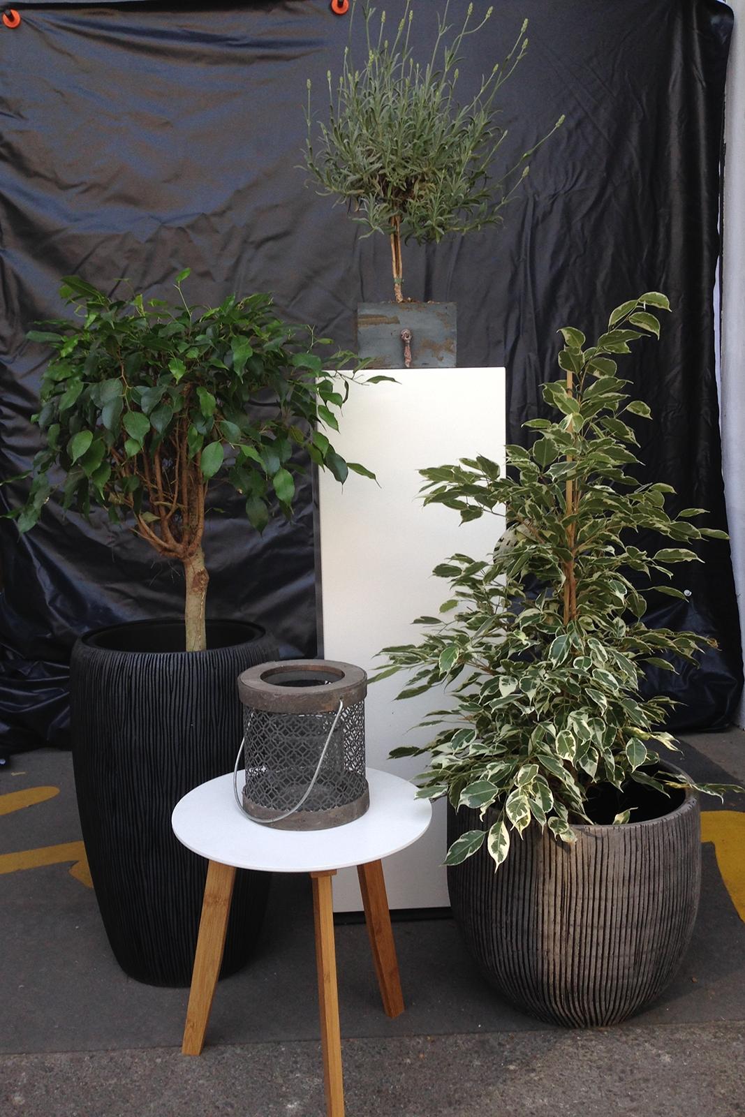 Blumentöpfe Steingut 094205 / Holzsäulen für Pflanzen etc. 094206