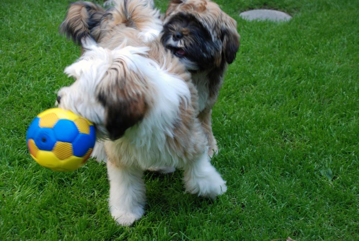 Dann nimmt sich Merlin den Ball