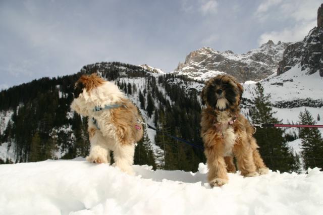Merlin und Motte in Südtirol