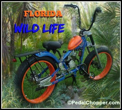 Florida Gators theme bike