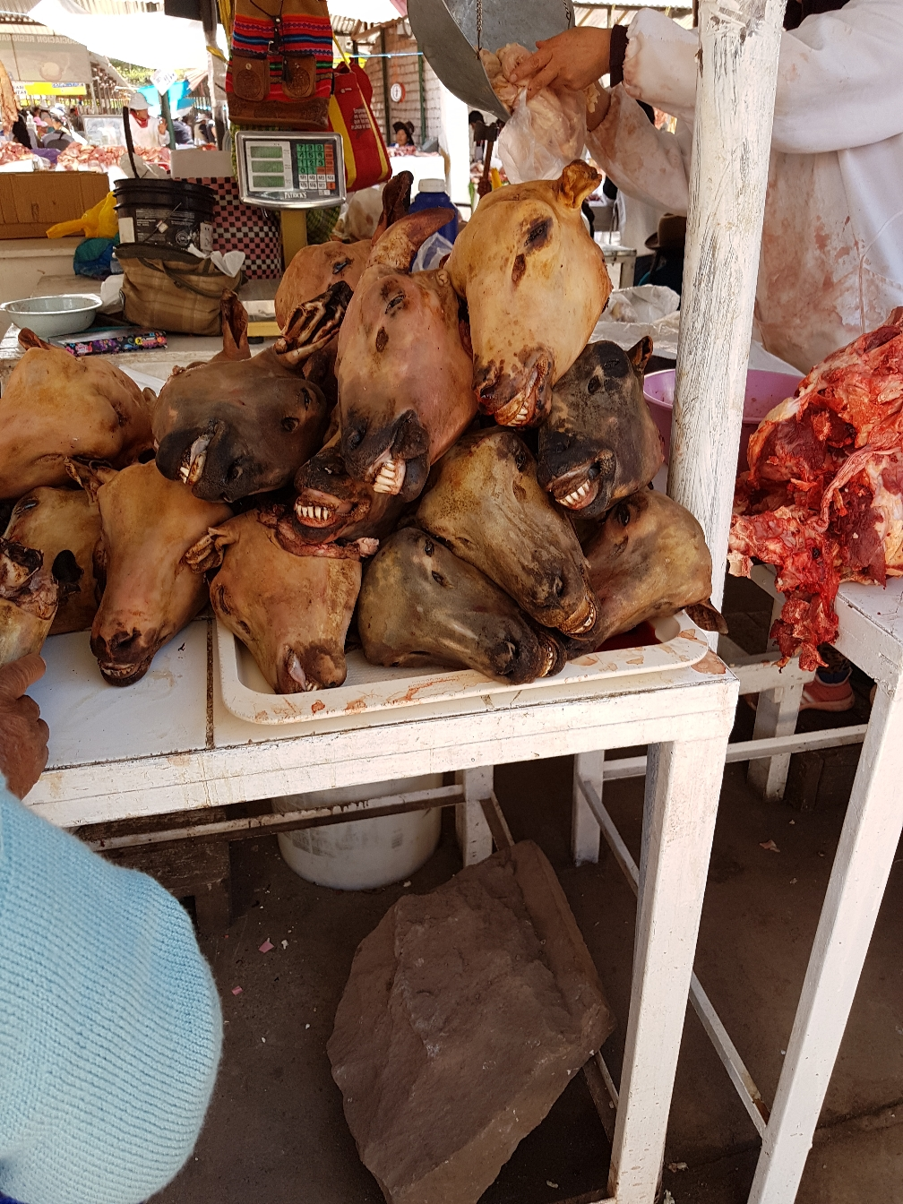 Schafsköpfe - Suppen mit Tierköpfen werden hier gern gegessen.