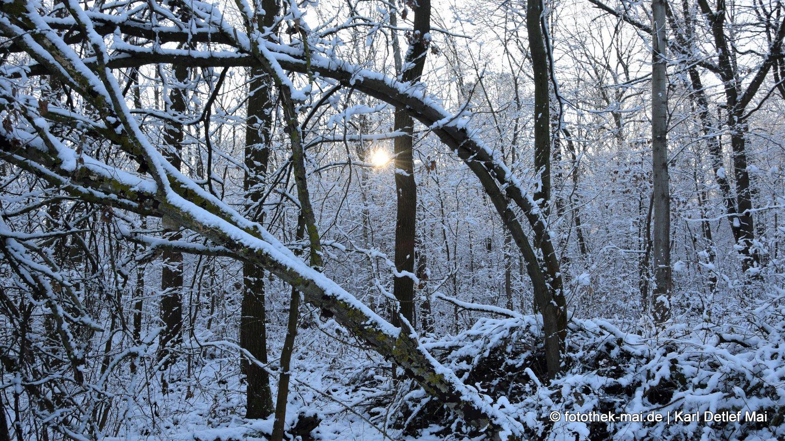 Auf Biegen und Brechen // Die Bäume schützen sich gegenseitig. Oberholz bei Leipzig