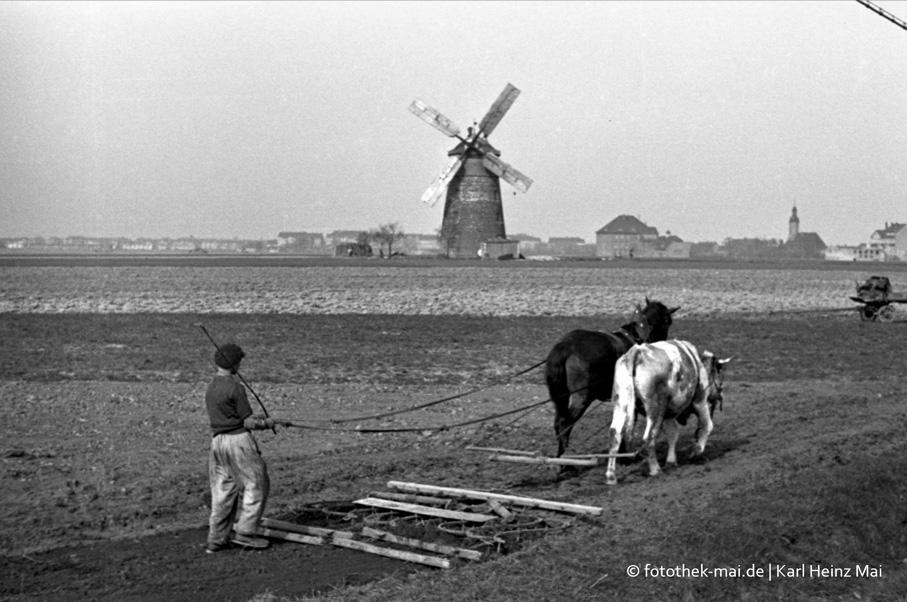 Bilder vom Lande aus den 1950er Jahren, Volkskundemuseum Wyhra, 2018