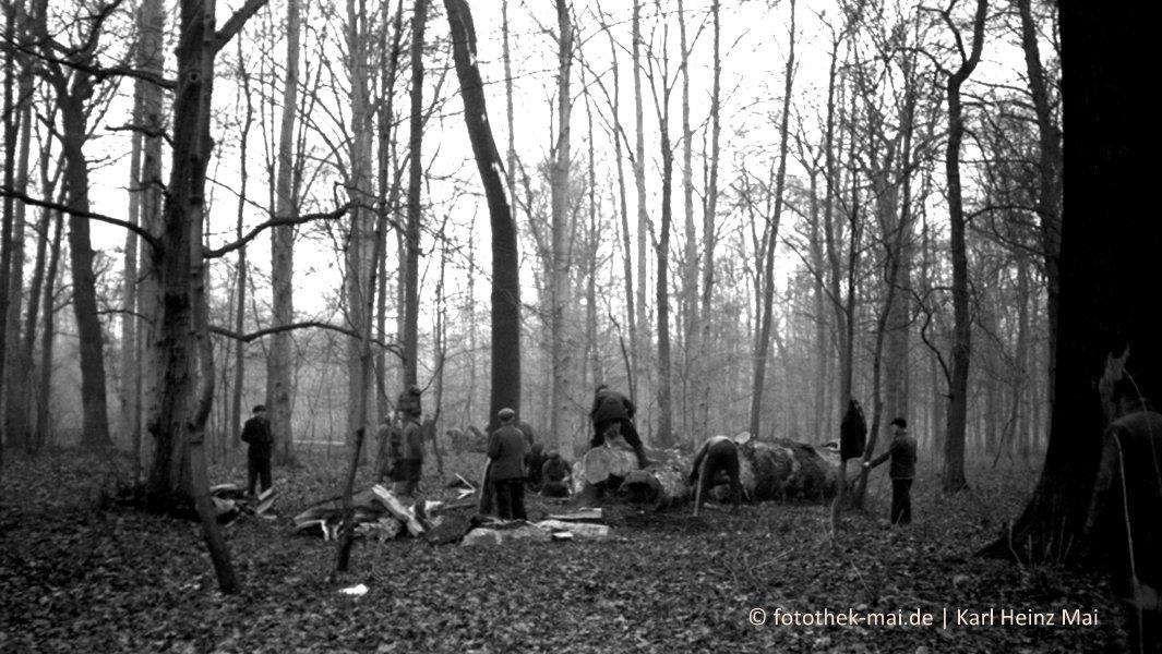 Im kahlen herbstlichen Wald zerteilen Männer große Bäume.