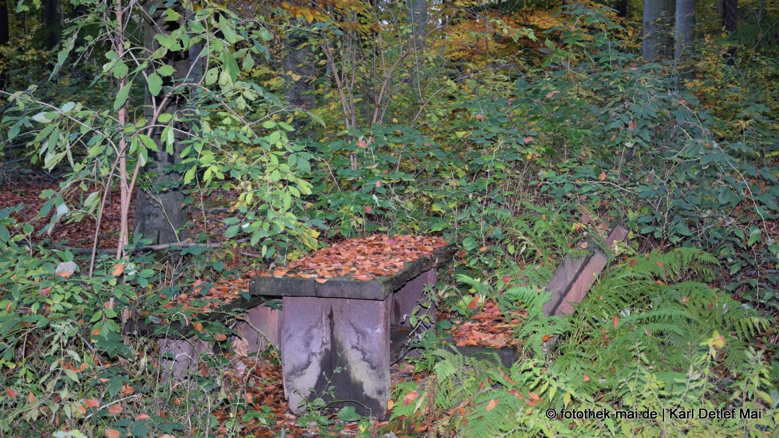 Nicht nur die Natur reagiert, wenn niemand kommt // Rastplatz im Oberholz bei Leipzig