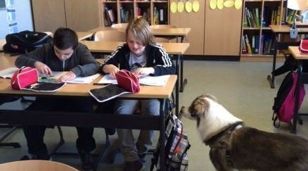 Schulhund Balto