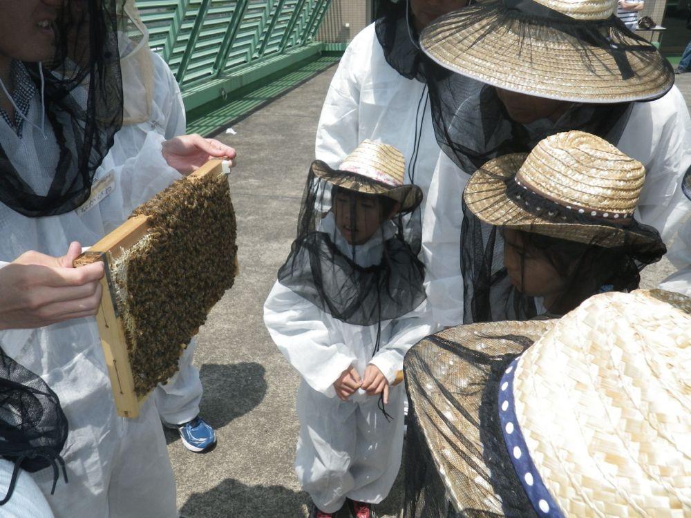 ミツバチを説明する國學院大生