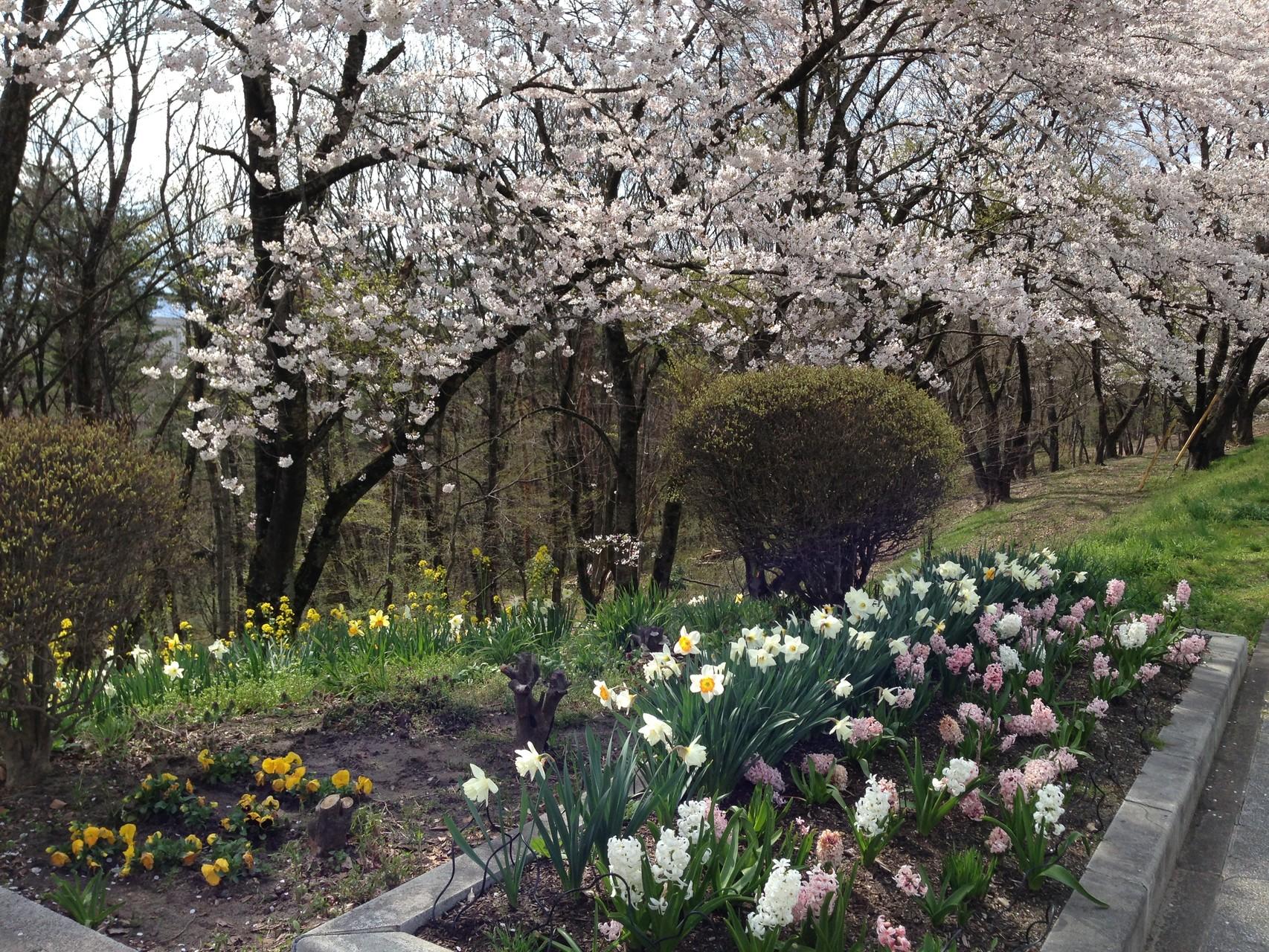 中央町内会の皆さんの作った花壇も素敵ですね!色とりどりの草花も魅力です。