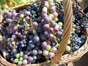 南フランス,ワイン