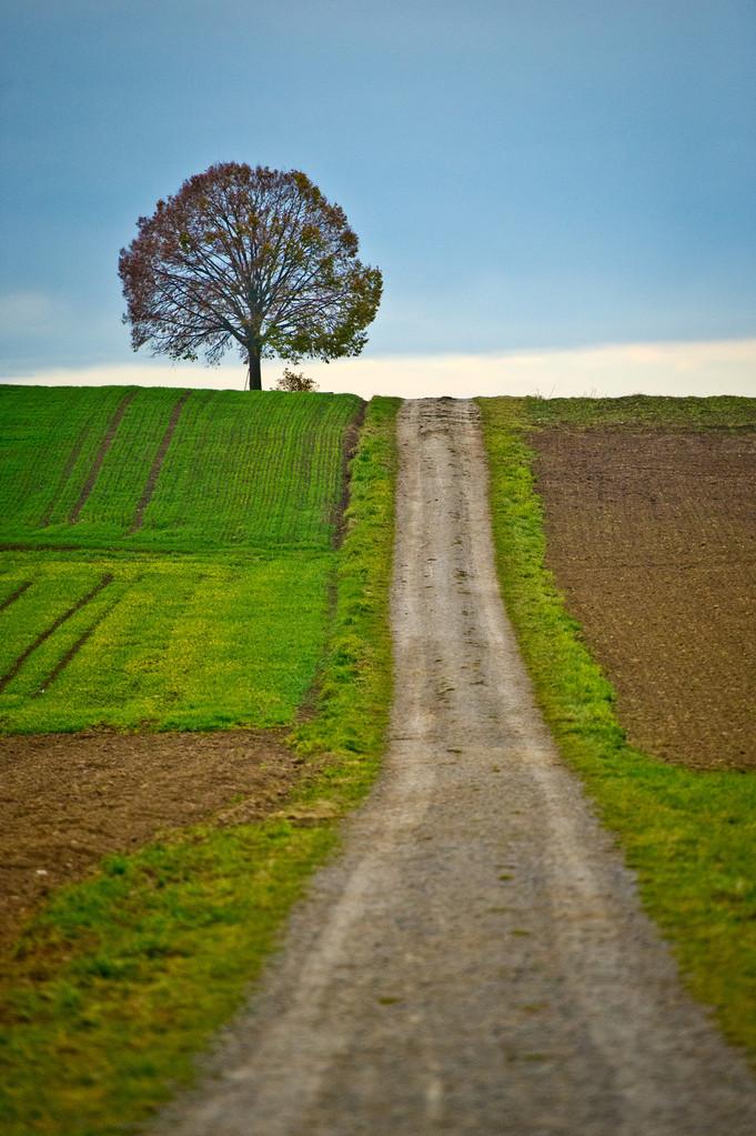 Weg zum Baum