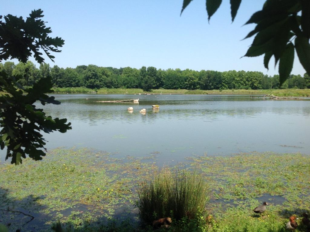 Lac d'Orthez/Biron - Saligue aux oiseaux