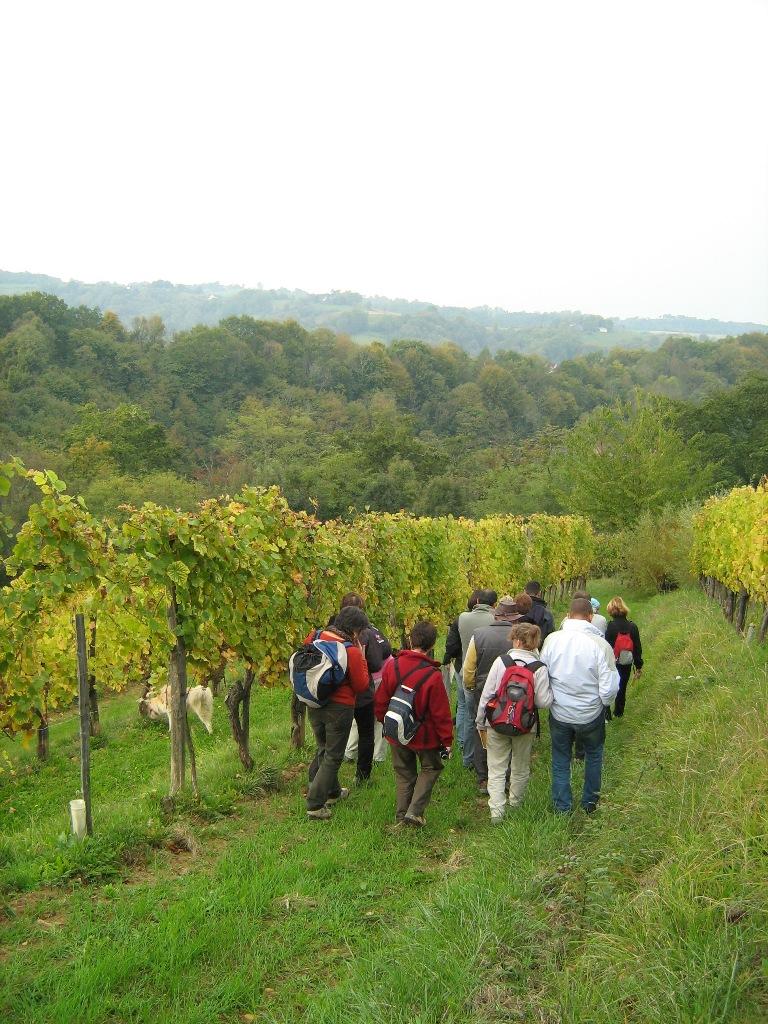 Balade nature dans les vignes