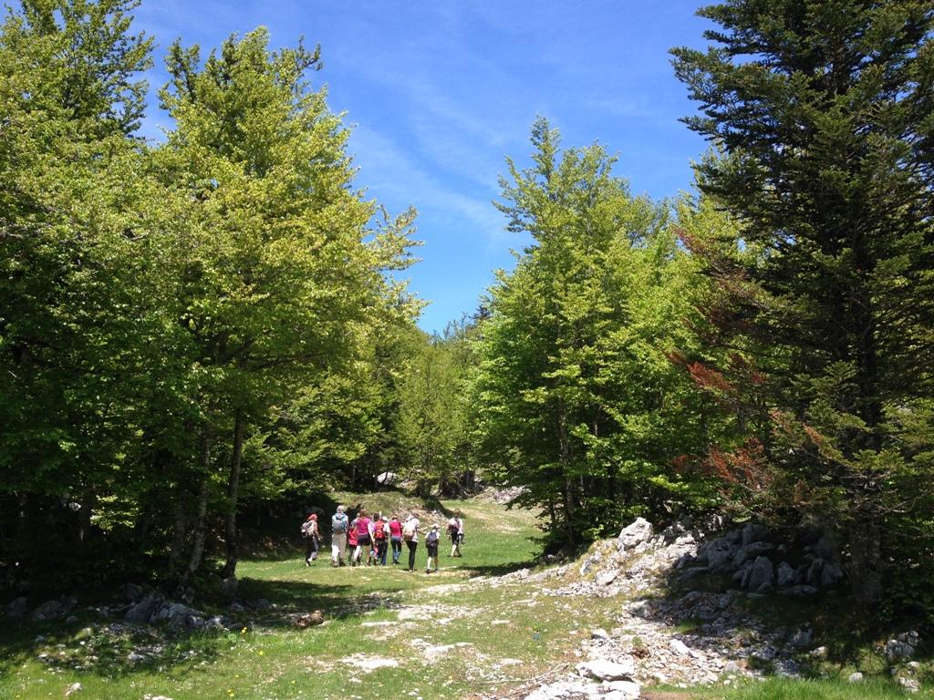 Forêt du Braca à La Pierre-Saint-Martin