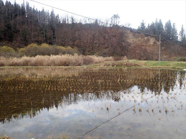 田んぼの畔の写真