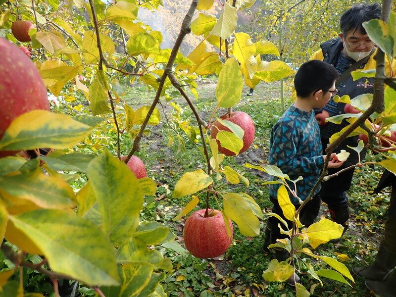 りんご&キノコの収穫体験@山形県大江町