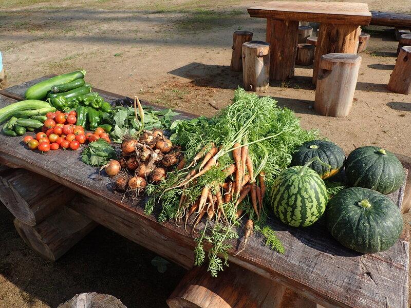 夏野菜の収穫体験 準備スタート!