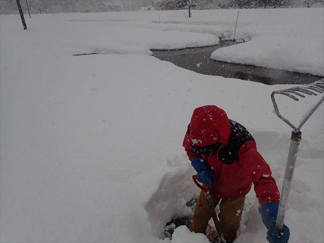 この辺りは雪が多い所なので水路チェックだけでも大変ですが、いきものの為と思えば平気です(笑) ※昨年の1月撮影