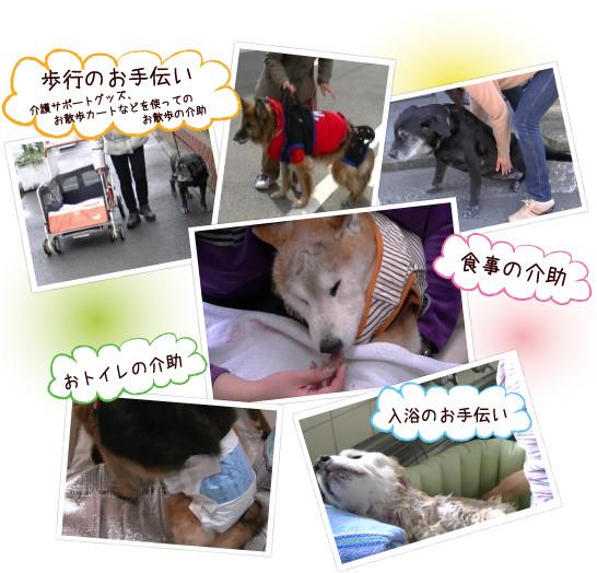 犬・猫介護‐ペットケアワンディ泉北