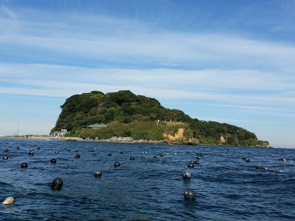 猿島わかめ養殖の海畑(養殖棚)