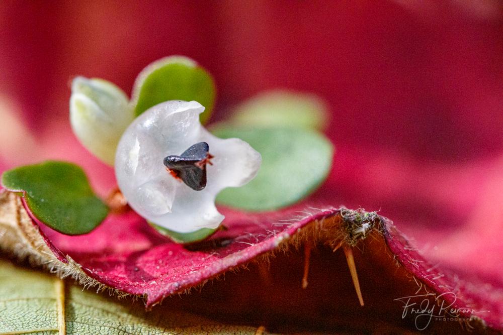 Aus der Bienenperspektive