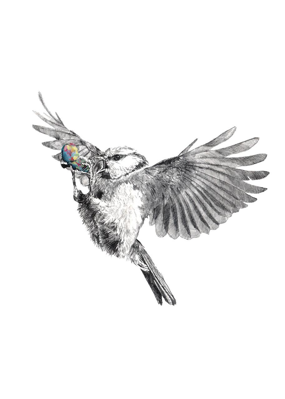 Juno 40x40cm pencil, watercolor 2015