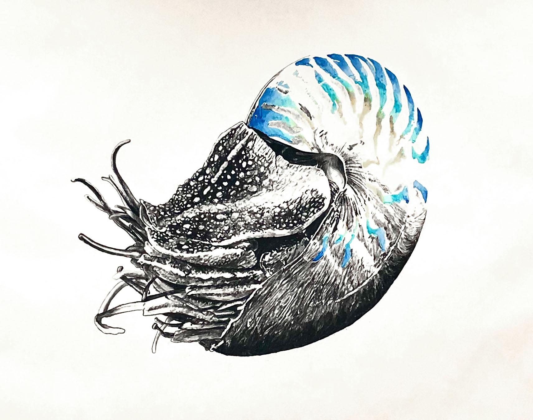 Nautilus 100x140cm charcoal, watercolor 2020