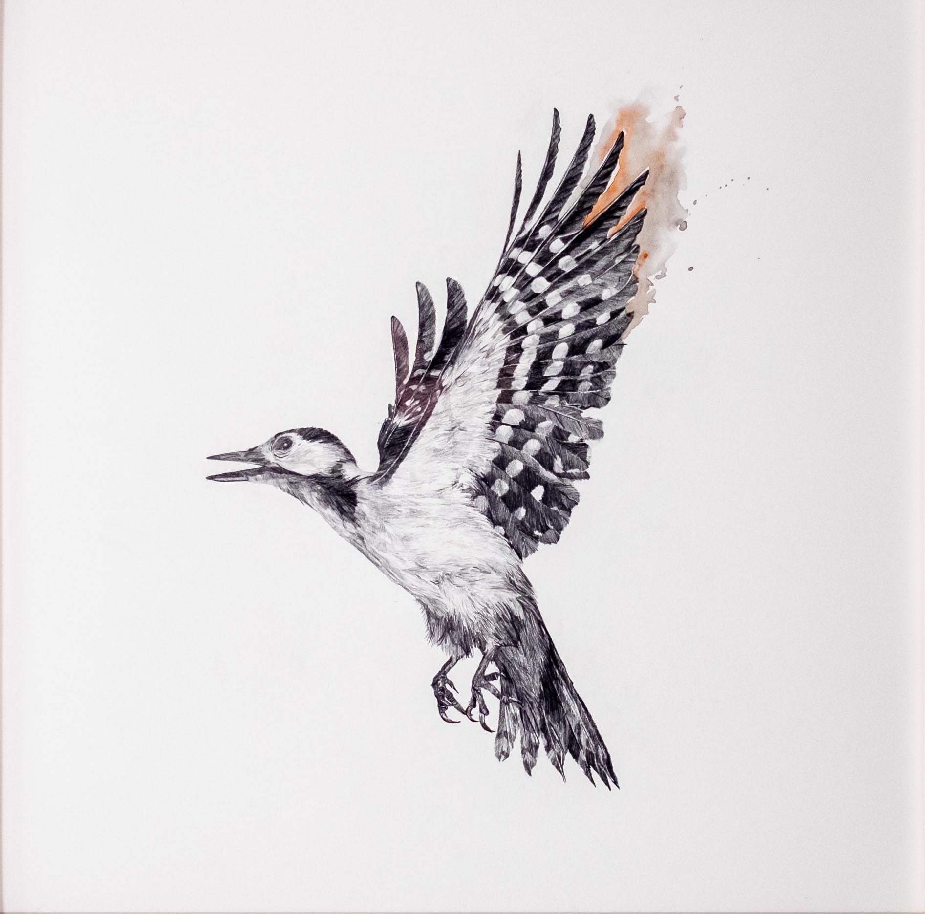 Bewegungsstudie Specht III 70x70cm pencil,watercolor 2021