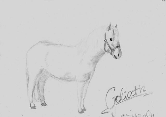 Goliath - das frechste Pony