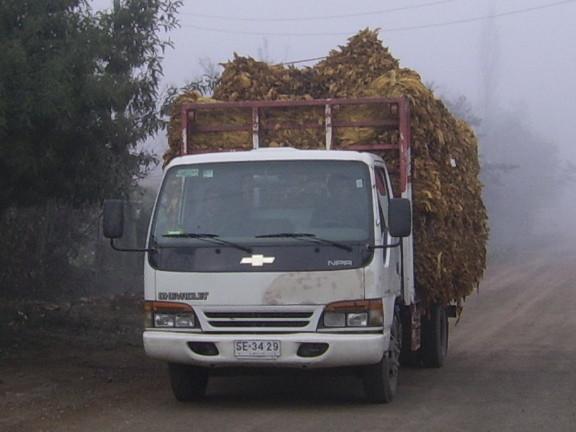 Traslado de Tabaco desde Peor Es Nada a  La Planta Chile Tabacos S.A.
