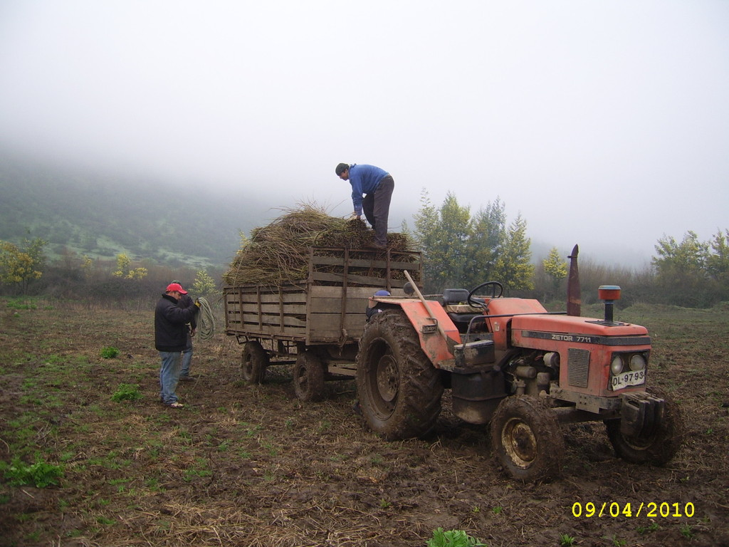 Traslado de Mimbre desde el campo a los pozos de almacenamiento para el proceso de brote